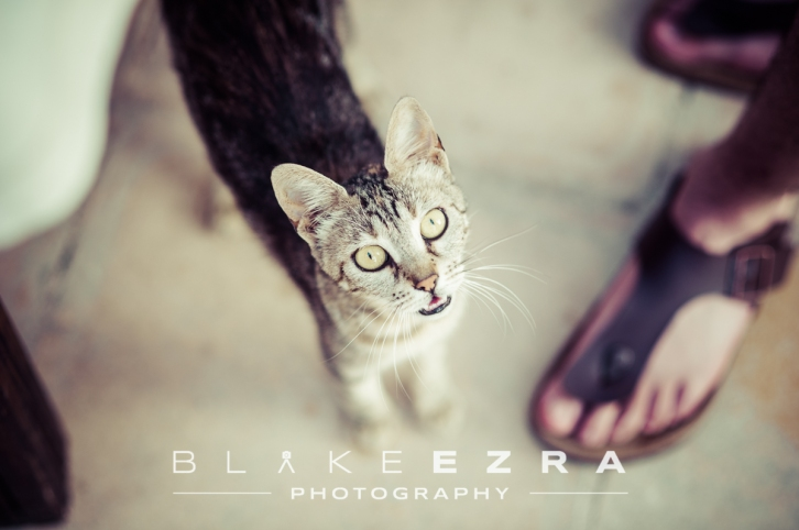 02.07.2015 Sheera and Tom pre-wedding party in Kasiopi, Corfu. (C) Blake Ezra Photography Ltd.  www.blakeezraphotography.com
